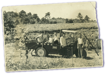 おかげさまでやまふじぶどう園開園から約90年が経ちました