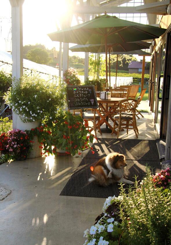 ペット入店OKのカフェレストランです。