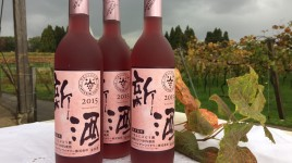 2015新酒